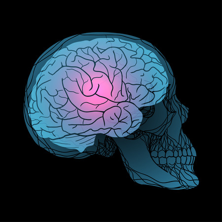 x ray machine: X-rays of the human skull with the brain.