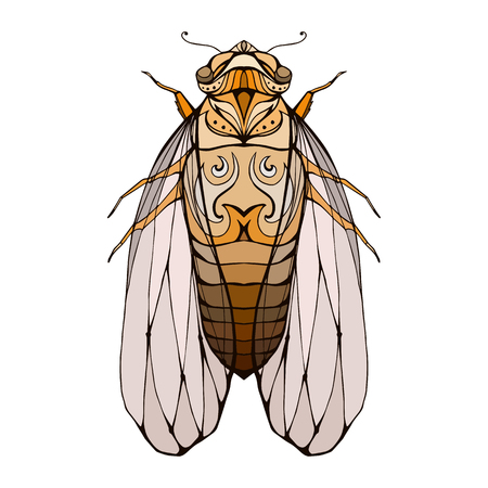 cicada bug: Illustration of colorful cicada  with boho pattern. Vector element for coloring prints, for T-shirts, tattoos and a sketch for your creativity