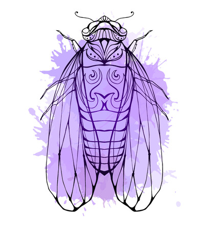 cicada: Illustration cicada  with boho pattern and watercolor splashes. Vector element for coloring prints, for T-shirts, tattoos and a sketch for your creativity