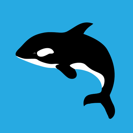 Flat illustration with grampus on a blue background. Vector killer whale for your design.