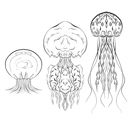 Set of contour black and white illustrations of jellyfishes. The object is separate from the background. Linear illustration for printing on T-shirts, covers, sketches of tattoos and your design.
