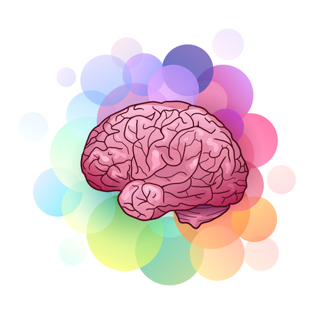 Cartoon illustration of human brain with highlights and shadows with colorful circles. Side view. Creativity and inspiration. The object is separate from background. Vector element for your creativity