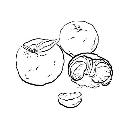 Contour black and white cartoon illustration of  mandarin. Citrus. Illustration