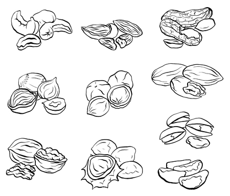 Set of contour drawings of various types of nuts. Objects separate from the background. Vector element for menus, recipes and your design. Ilustração