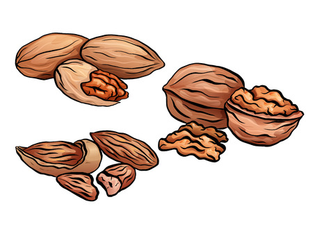 Set of colored cartoon nuts. Kit of walnut, pecan and almond. Objects separate from the background. Vector element for menus, recipes, cards and your design.