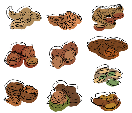 Set of contour drawings of various types of nuts with colored spots. Objects separate from the background. Vector element for menus, recipes and your design.