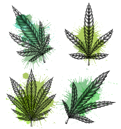 Set of different leaves of marijuana with hatching and watercolor splashes. The object is separate from the background. Vector engraving element for menus, articles, cards and your creativity