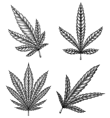 Set of different leaves of marijuana with hatching. The object is separate from the background. Vector engraving element for menus, articles, cards and your creativity Çizim