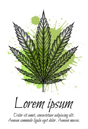 Card template with leave of marijuana with hatching and watercolor splashes.  Vector engraving element for menus, articles, cards and your creativity