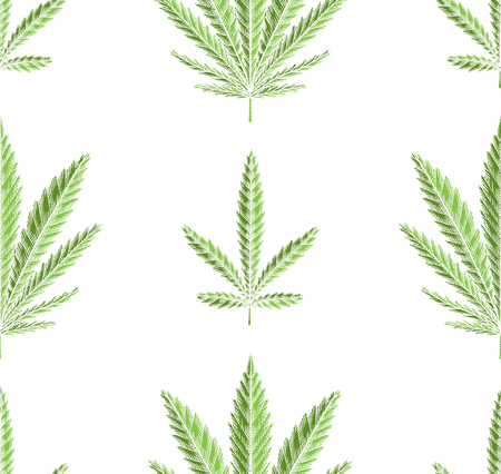 Seamless texture of green leaves of marijuana in row on white background. Vector herbs pattern for fabrics, wallpapers and your creativity. Ilustração