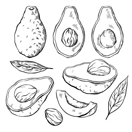 Set of sketch avocados. Various engraving elements of avocado slices with pits and leaves. Keto diet. Ingredients for Guacamole. Vector outline element for menus, articles, cards and your design.