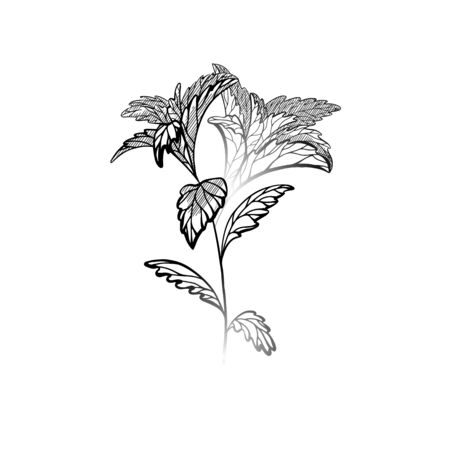 Hand drawn stevia plants with hatching. Natural healthy sweetener. Useful herbal organic product. Plant with branches, leaves. Vector engraving element for menu, recipes, articles and your design Vectores