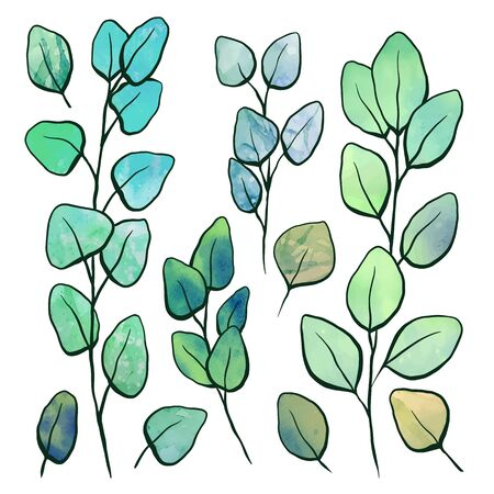 Botanical watercolor illustration of eucalyptus populus. Set of hand drawn eucalyptus branches with foliage and contour. Vector color objects for articles, cards and your design.