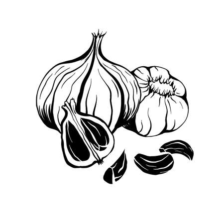 Illustration of black fermented garlic. Product for health and longevity. Useful seasoning for Asian dishes. Natural sweetener. Vector element for menu, recipes and your design.