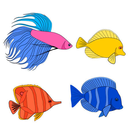 Set of color contour different tropical fish. Fish rooster, pennant fish, royal angel. Marine inhabitants. Vector colorful outline silhouette for icon, logos and your design