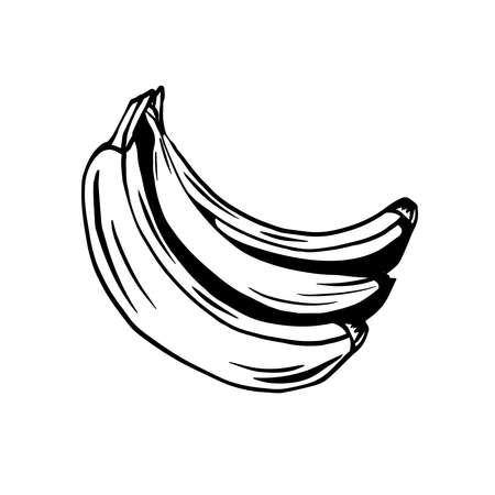 Sketch of bunch of juicy tropical bananas on a white background. Vector outline cartoon fruits for cards, banners, menus, recipes and your creativity