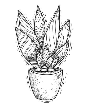 Contour illustration of succulent cactus with long petals in a pot with hatching. Engraved picture of home plant for interior decoration. Vector sketch for card, banner, sticker and your creativity.
