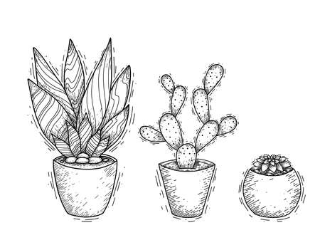 Set of contour illustration of succulent cactus in pots with hatching. Engraved picture of a home plant for interior decoration. Vector sketch for cards, banners, stickers and your creativity.