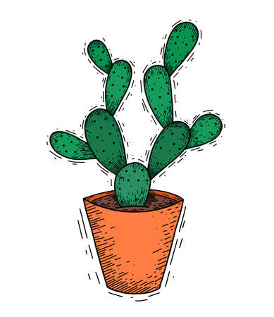 Doodle illustration of a flat cactus with thorns in a clay pot. Sketch with hatching in color. House plant for home decoration. Hand drawn careless drawing of a desert flower.