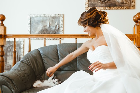 Pre-wedding preparation. Cute cat lying on sofa and playing with bride. Bride wearing white wedding dress and veil. Indoor