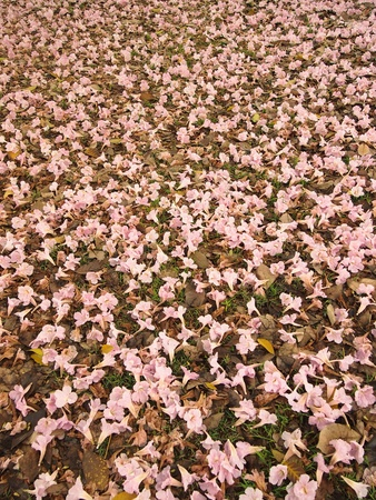 Pink falling flowers on  grass photo