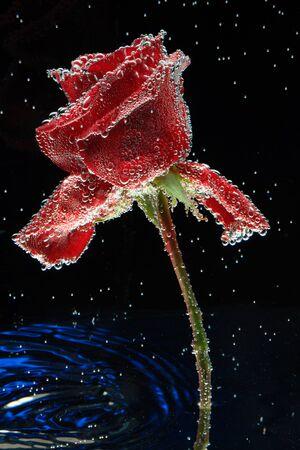 Rose background water postcard. Stock fotó - 138287055