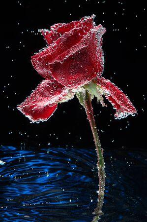 Rose background water postcard. Stock fotó - 138286840