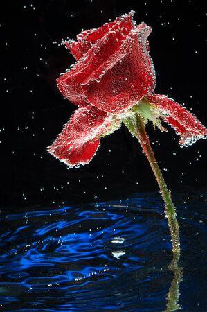 Rose background water postcard. Stock fotó - 138286843