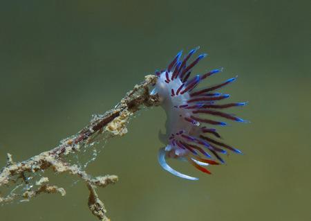 invertebrate: small invertebrate looking food on algae