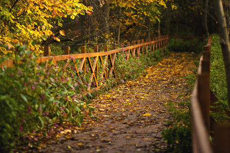 Alley in autumn park via a wooden bridge with railings.