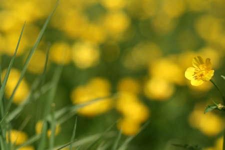 Yellow flower on green blur background