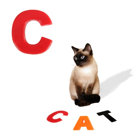 Illustrated alphabet letter C and cat  photo