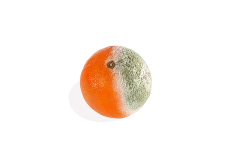 Closeup of a moldy orange on a white background photo