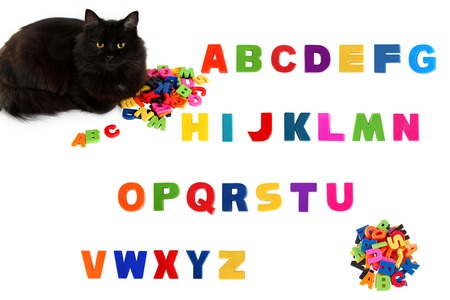 Alphabet  and black cat on white .