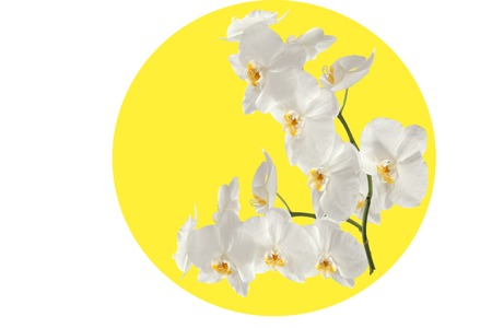 Orchid branch in the yellow circle. photo