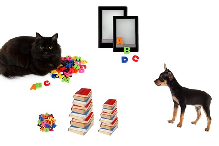 toyterrier: Books, cat and toy-terrier puppy with electronic book on white background. Stock Photo