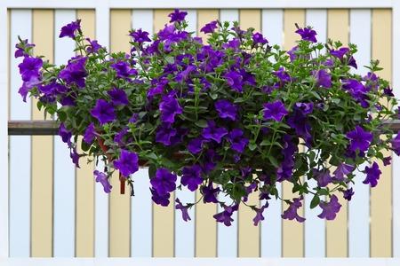 Terraza Flor Decorado De Una Casa Fotos Retratos Imágenes
