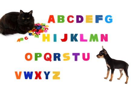 toyterrier: Alphabet, black cat, toy-terrier puppy  on white background