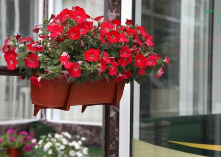 Flower decorated terrace of a house  photo