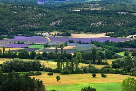 faboideae: Campo di lavanda, Provenza-Alpi-Costa Azzurra, Francia meridionale, la Francia, l'Europa Blooming Archivio Fotografico