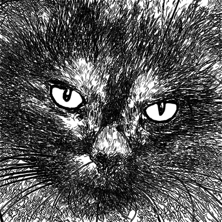 nose close up: Black cat looking to you Stock Photo