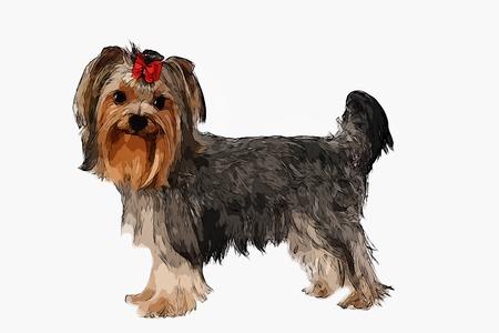 yorkshire: Yorkshire Terrier Portrait