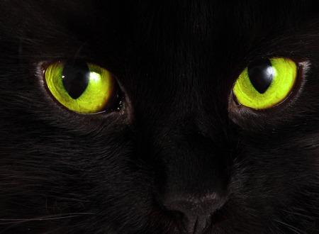 ojos negros: Gato negro mira con ojos verdes brillantes
