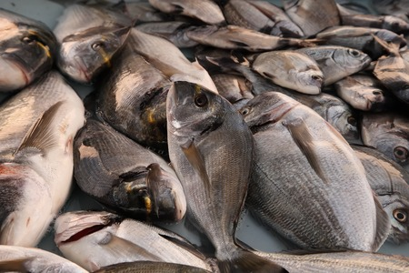 city fish market: France, Marseille -November 19, 2015.: Fresh fish at the fish market of Old Port of Marseille Vieux-Port in Marseille,France.Marseille is Frances largest city on the Mediterranean coast and largest commercial port. November 19, 2015.