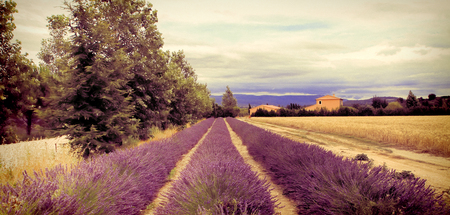 Summer Landscape with Lavender field in Provence, southern France. Filter applied with  instagram look . Stock Photo