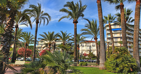 Palm trees on the Croisette in Cannes city