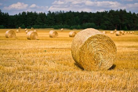 Harvest time of wheat, scenic landscape, golden rye field with haystack, season of crop, farm producing food, cultivated organic seeds of bread, beauty of nature in autumn.