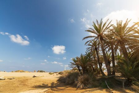 Palms in the beautiful Vai palm beach at eastern part of Crete island. Stockfoto