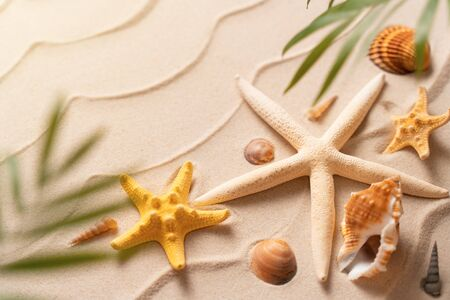 soft focus Flat lay top view copy space, Minimal exotic concept. Creative layout of sand waves. Summer beach background with shell, sea star and blurred Palm, vacation and travel concept Stock Photo
