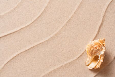 summer beach background with shell, vacation and travel concept, Flat lay top view copy space, Minimal exotic concept. Creative layout of sand waves.